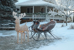 Sleigh and reindeer at the farm